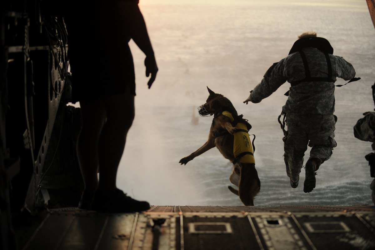 here-a-us-soldier-in-the-10th-special-forces-group-jumps-off-the-ramp-of-a-chinook-helicopter-with-his-military-working-dog-during-an-exercise